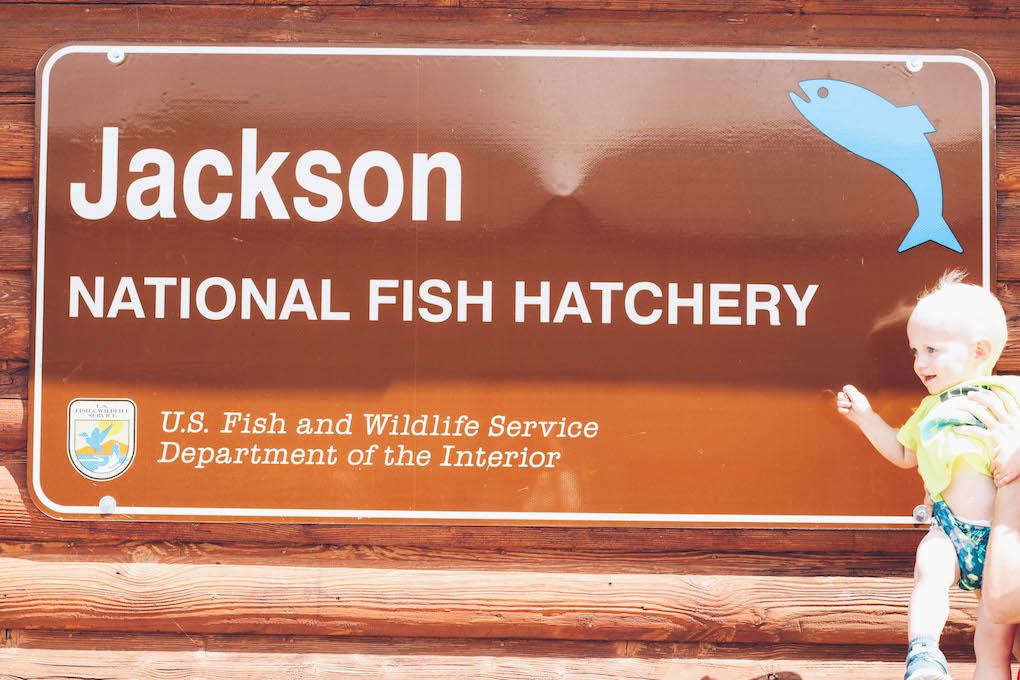 Jackson Hole 16-8