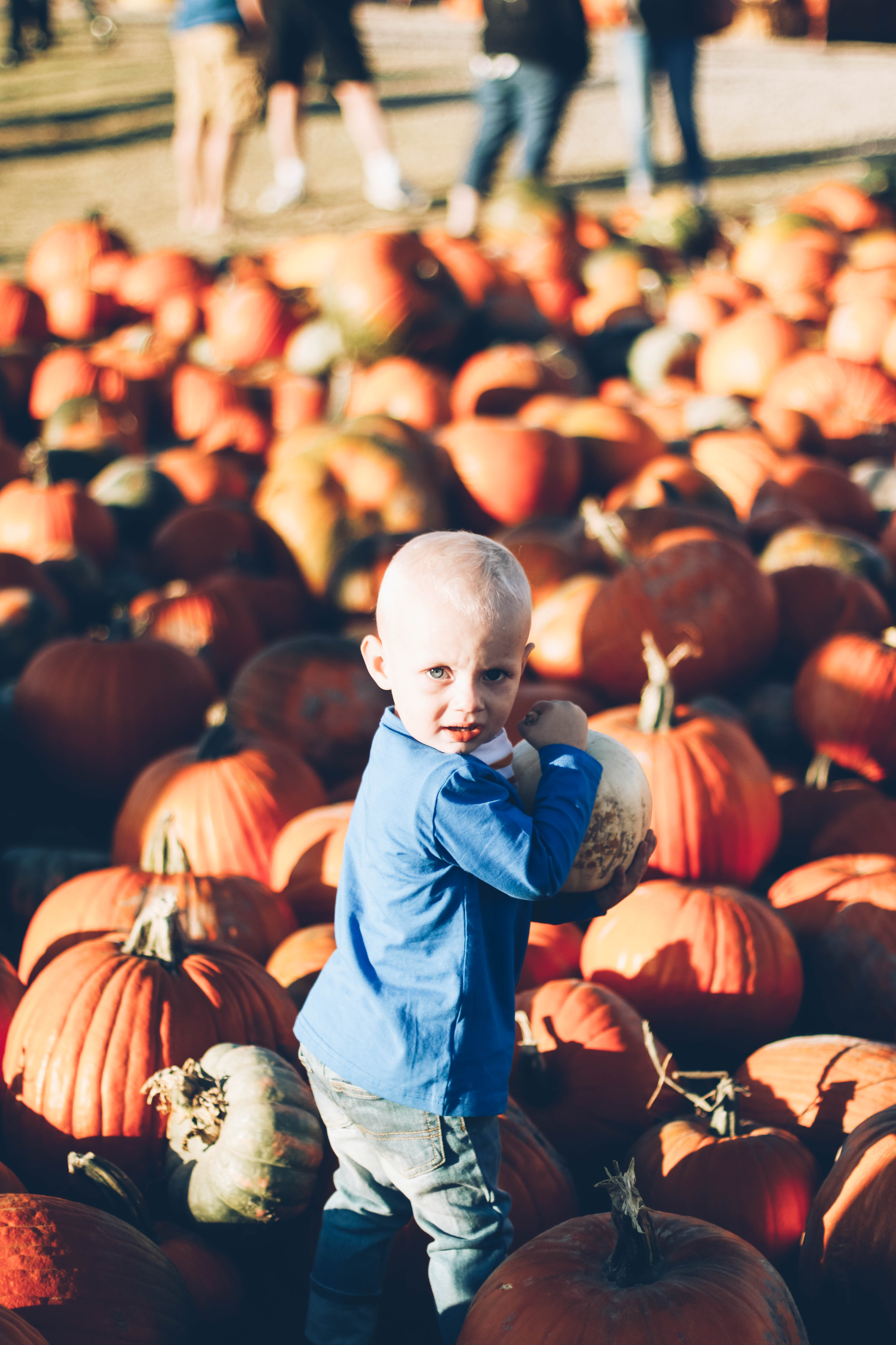 little boy playing in pumpkins at pumpkin patch in june and january