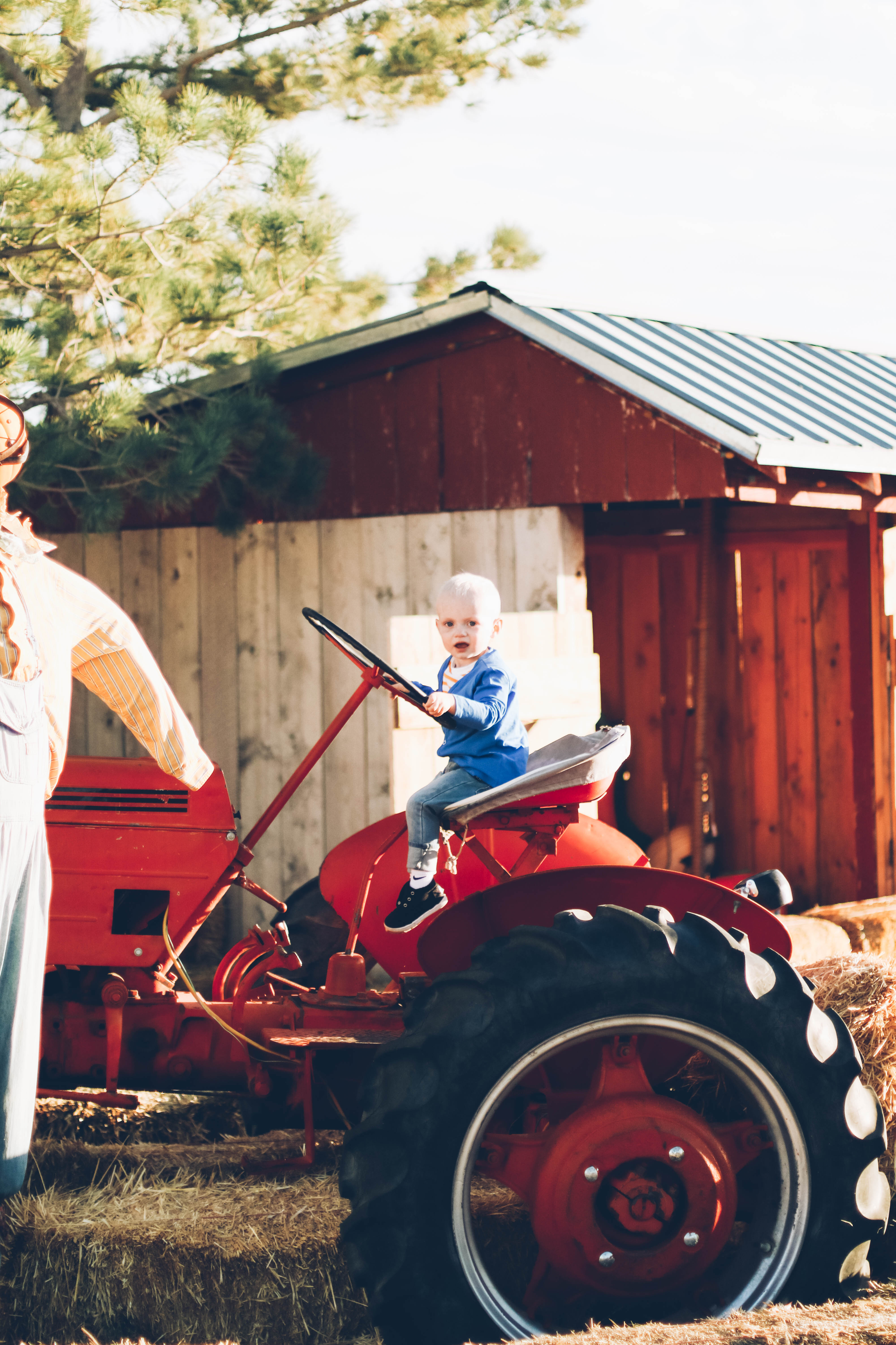 little boy sitting in june and january cardigan on bright red old tractor